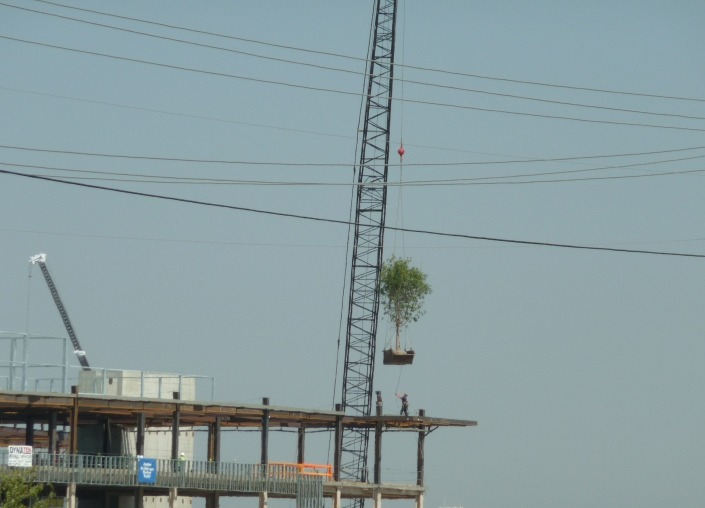 """Texas Health Alliance Project """"Tops Out"""" - Cambridge"""